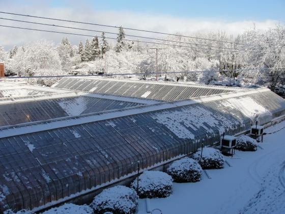 OSU greenhouses East wing (winter 2011)